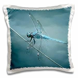 视觉边缘自然–MACRO 特写 OF A 蓝色 darner Dragon FLY 昆虫–枕套