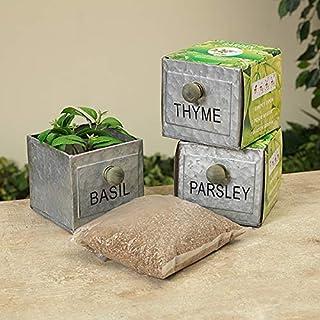 Basil Thyme & Parsley 镀锌金属草本植物套装 灰色
