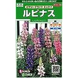 Sakata田园 实咲花6884 RAPINA PIXY DIRECT 00906884