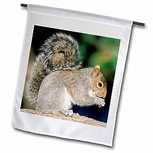 danita delimont–松鼠–灰色草兰松鼠–NA02aje0299–ADAM JONES–旗帜 12 x 18 inch Garden Flag