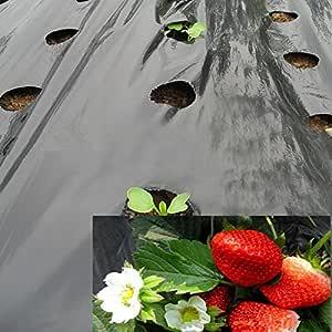 OriginA 1 密耳塑料薄膜,花园薄膜,塑料微孔膜,草莓番茄除草聚乙烯,黑色,6 孔,孔直径 4.45 厘米,15.24 x 304.8 厘米