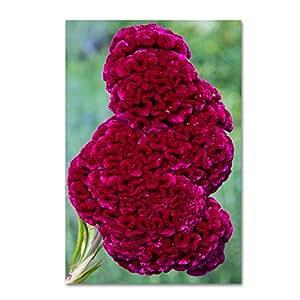 """Trademark Fine Art Coxcomb Flower Wall Decor by Kurt Shaffer, 22"""" x 32"""""""