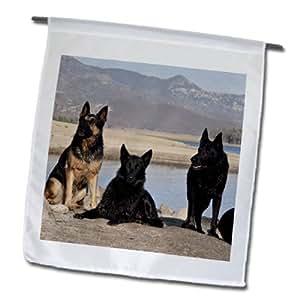 danita delimont–狗–FOUR 德国牧羊犬 Dogs–US05zmu0361–zandria muench beraldo–旗帜 12 x 18 inch Garden Flag