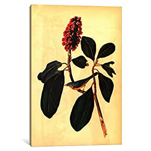 iCanvasART 1724-1PC3-40x26 Warbler Canvas Print by John James Audubon, 0.75 by 26 by 40-Inch