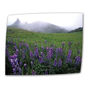 Art Wall Figueroa Mountain with Fog 12 by 18-Inch Flat/Rolled Canvas by Kathy Yates with 2-Inch Accent Border