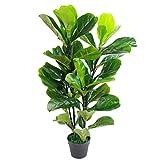 叶子设计英国人造植物 Fiddle 木果树 - 盆栽黑色塑料盆 90cm (3ft) Fiddle Fig 90cm (3ft) Fiddle Fig LEAF-7147
