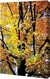 "PrintArt GW-POD-11-PSHSF-251-20x30""Autumn Color I""由 Alan Hausenflock 画廊装裱艺术微喷油画艺术印刷品 13 x 20 英寸 GW-POD-11-PSHSF-251-13x20"