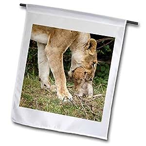 danita delimont–狮子–肯尼亚,马赛 Mara RESERVE ,非洲狮子–af21jmc0284–JOE and Mary ANN mcdonald–旗帜 12 x 18 inch Garden Flag