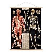 Cavallini 复古 L'anatomie 悬挂海报套件