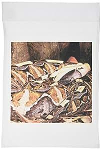 danita delimont–蛇–东非洲 gaboon VIPER 蛇–NA02dno0433–David northcott–旗帜 12 x 18 inch Garden Flag