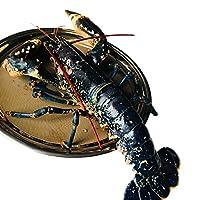 【活鲜】法国蓝龙虾450-550g/只