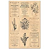 Florilèges Design Stamp fha112037 剪贴簿 Herbarium 米色 15 x 10 x 2.5 厘米