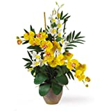 Nearly Natural 1071-YC Double Phalenopsis/Dendrobium Silk Flower Arrangement, Yellow/Cream