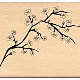 Florilèges Design FG111109 米色剪贴簿带樱桃分支设计(8 x 10 x 2.5厘米)