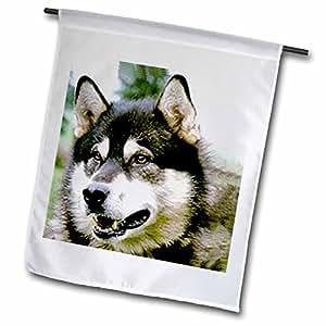 狗阿拉斯加雪橇犬–阿拉斯加雪橇犬–旗帜 12 x 18 inch Garden Flag