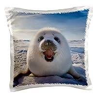 danita delimont–SEALS–海豹 PUP , iles DE LA madeleine , quebec ,加拿大–cn10ksu0014–keren SU–枕套