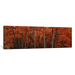 """iCanvasART Quaking Aspens Dixie National Forest UT Canvas Print by Panoramic Images, 36"""" x 12""""/1.5"""" Deep"""