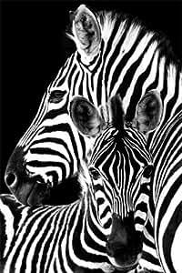 海报与配件 zebras 黑色和白色