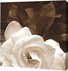 "PrintArt ""Gardenia Garden""Rebecca Swanson 画廊装裱艺术微喷油画艺术印刷品 20"" x 20"" GW-POD-33-S750D-20x20"