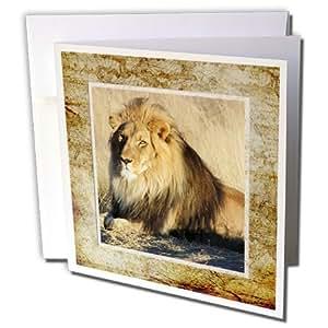 SpiritualAwakenings_Animals - 野生雄狮 - 贺卡 Individual Greeting Card