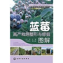 蓝莓高产栽培整形与修剪图解
