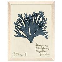 Maxxi Designs 45.72 厘米 x 60.96 厘米蓝色卡普拉诺海藻 #32 带框艺术品