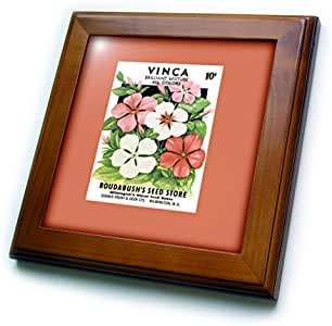 3dRose ft_170957_1 Vinca Brilliant Mixture 复古种子包复制品带框带,20.32 x 20.32 厘米