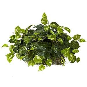 Pothos Ledge 丝绸植物 绿色 均码 6708