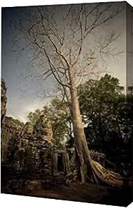 """PrintArt """"丝绸棉树""""由 Erin Berzel 创作画廊装裱艺术微喷油画艺术印刷品,38.10 cm x 60.96 cm"""