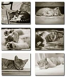 各种睡觉小猫空白记事卡 - 内部空白 - 包括卡片和信封 - 6 种独特设计 - 13.97 cm x 10.80 cm 12 包 多种颜色