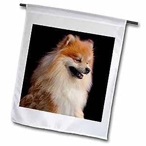Dogs Pomeranian - Pomeranian 肖像 - 旗帜 18 by 27-inch fl_1261_2