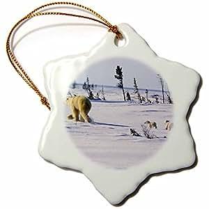 "3dRose"" Manitoba, Churchill, Polar Bear and Cubs-Cn03 Gje0014 - Gavriel Jecan 雪花装饰,多色,3 英寸"