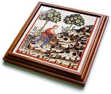 Danita Delimont - Illustrations - Tacuinum Sanitatis, Medieval Health, Illustration - HI13 PRI0233 - Prisma - Trivets 棕色 8 到 8 英寸