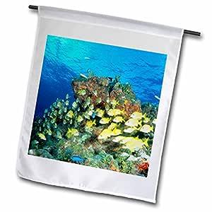 danita delimont–鱼–bluestriped grunt 鱼,加勒比–NA02mde0014–MICHAEL defreitas–旗帜 12 x 18 inch Garden Flag