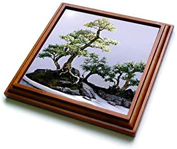 Trees - Bonsai Tree - Trivets 棕色 8 到 8 英寸