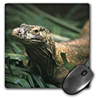 3dRose LLC 8 x 8 x 0.25 Inches Mouse Pad, Oceania, indonesia, Komodo Dragon (Lizard)-As11 Mwe0235 - Michele Westmorl and (mp_73146_1)