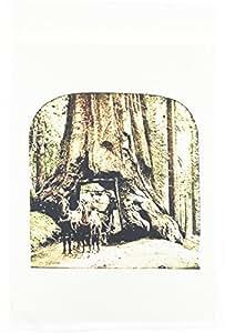 场景 from THE past stereoviews–vintage wawona Tree IN Yosemite 褪色–旗帜 12 x 18 inch Garden Flag