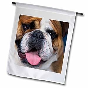danita delimont–狗–AN English 斗牛犬 IN belgium-eu04dfr0027–David R. frazier–旗帜 12 x 18 inch Garden Flag