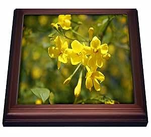 """taiche–摄影–茉莉–fragrant 黄花 OF 卡罗莱纳茉莉–trivets 棕色 8"""" by 8"""""""