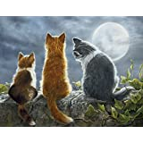 Lang 10.16 x 12.7 cm 猫猫猫须语盒装记事卡 Shirley Deaville,13 张卡片和信封 (0105166)