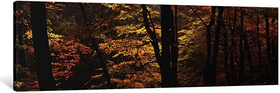 """iCanvasART 1 Piece Mid Section View Of Trees, Littlebeck, North Yorkshire, England, United Kingdom Canvas Print by Panoramic Images, 36 x 12""""/1.5"""" Deep"""
