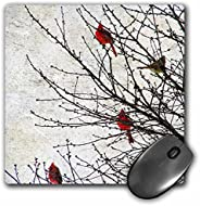 3dRose LLC 20.32 x 20.32 x 0.64 厘米鼠标垫,天使和斑点拍摄的红雀 (mp_12387_1)