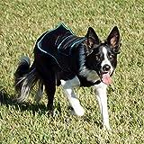 Benefab Canine 舒适护理衬衫 | 老年犬市场领先* | 增强舒适性和更好的恢复 黑色 大