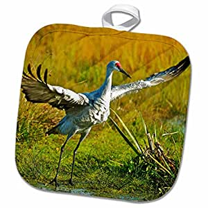 3D Rose Sandhill Crane-Grus Canadensis Taking Flight。 锅架,8 x 8