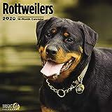 2020 狗日历 16 个月 12 x 12 墙壁日历 Bright Day Calendars 出品 Rottweilers 2020
