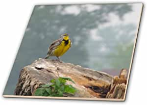 3dRose ct_21170_4 Meadow Lark-Ceramic Tile, 12-Inch