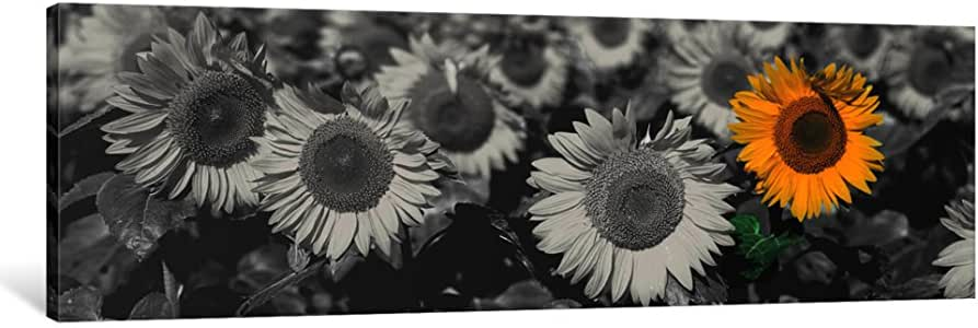 iCanvasART ICA1203-1PC3 Sun Flowers Color Pop Canvas Print by Panoramic Images, 0.75 by 16 by 48-Inch