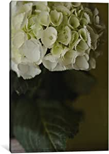 iCanvasART 14188-1PC6-18x12 Hydrangea II Canvas Print by Symposium Design, 1.5 by 12 by 18-Inch