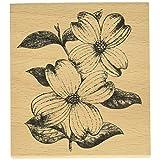 Hampton Art Cam & Chloe Dogwood Flowers 固定印章,10.16 x 8.89 厘米