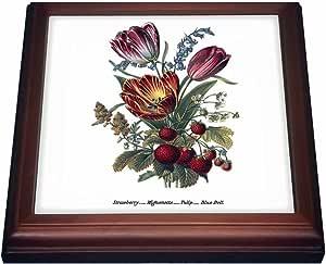 BLN Vintage Flower Collection - Vintage Flowers Strawberry Mignonette Tulip Blue Bells - Trivets 棕色 8 到 8 英寸